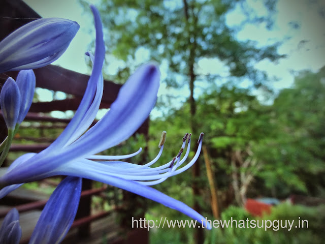 Flower in Autopia Tours Stay