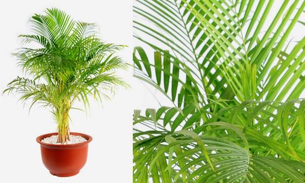 Coisa minha casa plantas para dentro de casa for Plantas para dentro de casa sombra