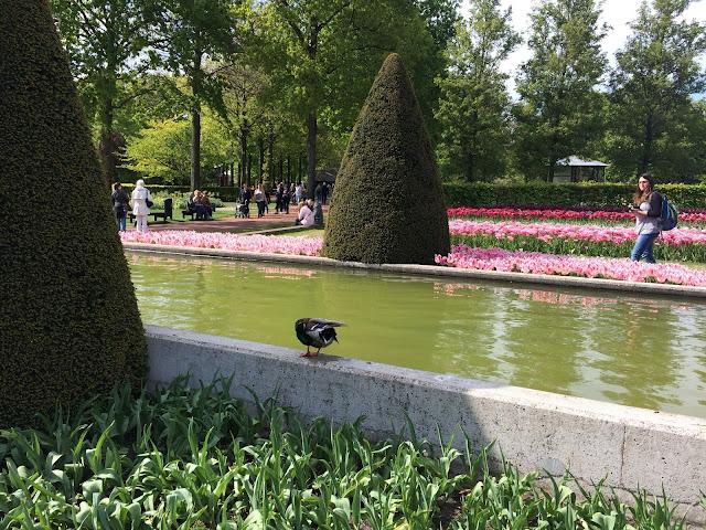 парк тюльпанов в Голландии Кейкенхоф