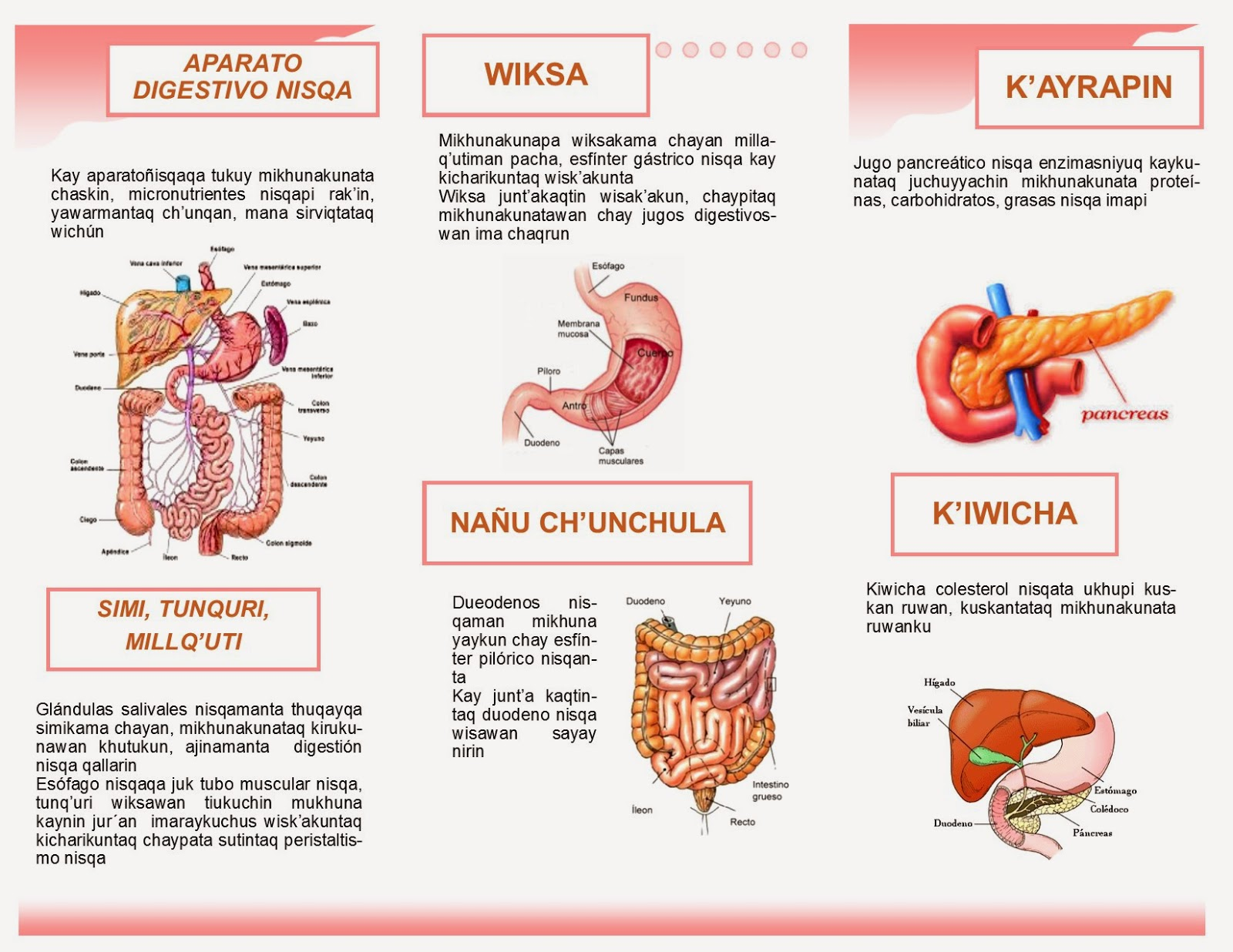 Enfermedades del sistema digestivo en pdf _ Updated - 54298272