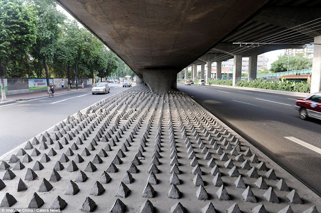 No space under the bridge: Concrete spikes 20cm high have been placed in various areas popular with homeless people in the Chinese city of Guangzhou