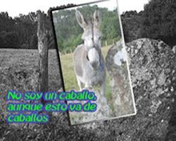 De caballo y otras cosas