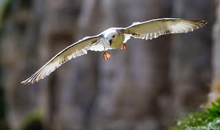 1 fulmar 10 of the Weirdest Animal Instincts and Behaviors