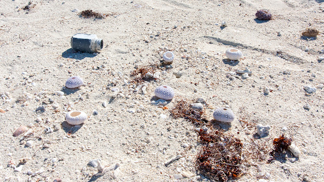 panorama isola maurizius, isola cervi, mauritius spiaggia vulcanica inquinamento pollution