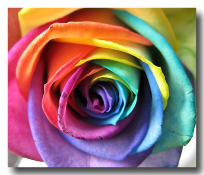 Mordialloc Florist: The rainbow rose, nasty or nice?