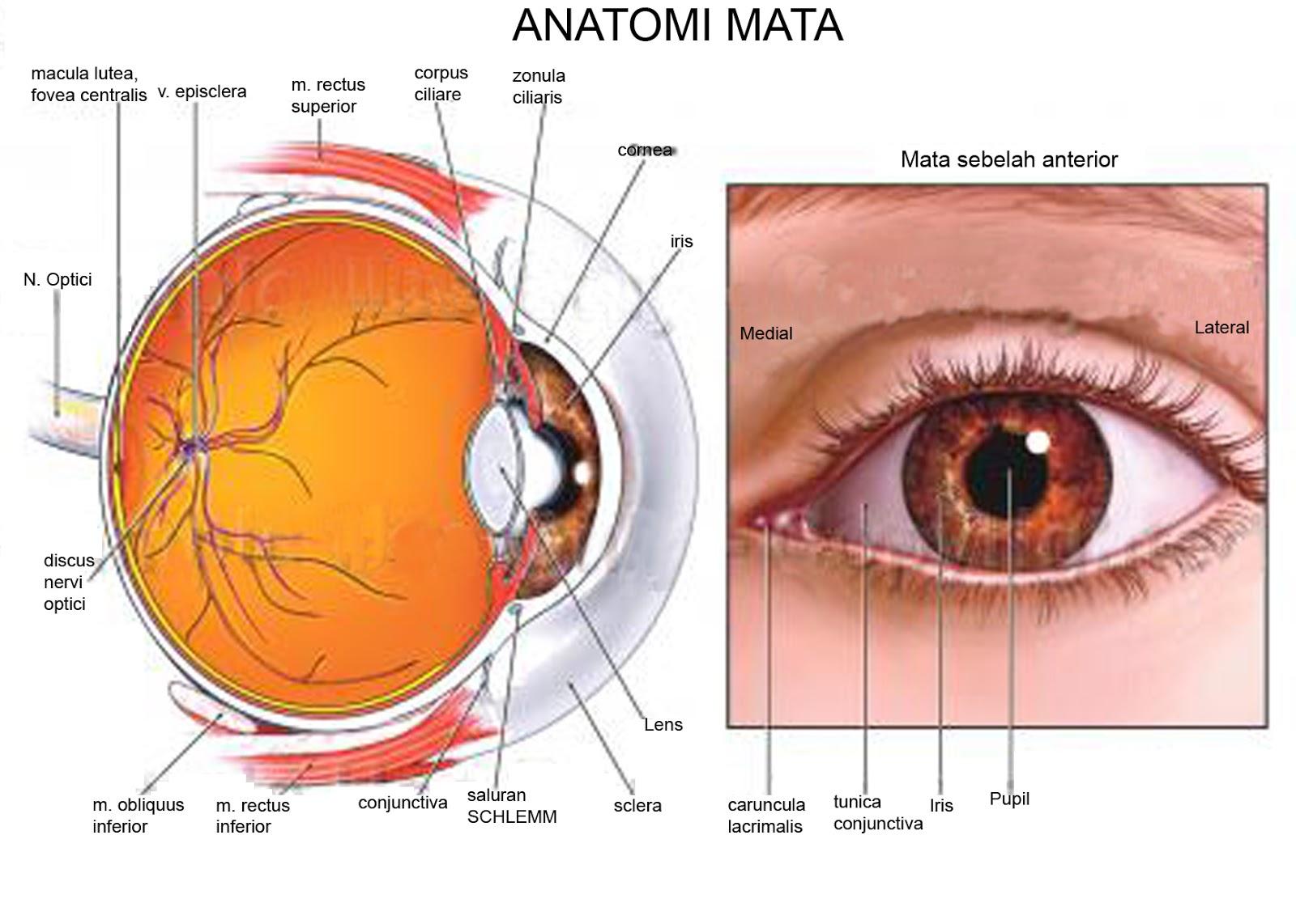 Lukisan Asa: Askep pada Klien dengan Retinoblastoma