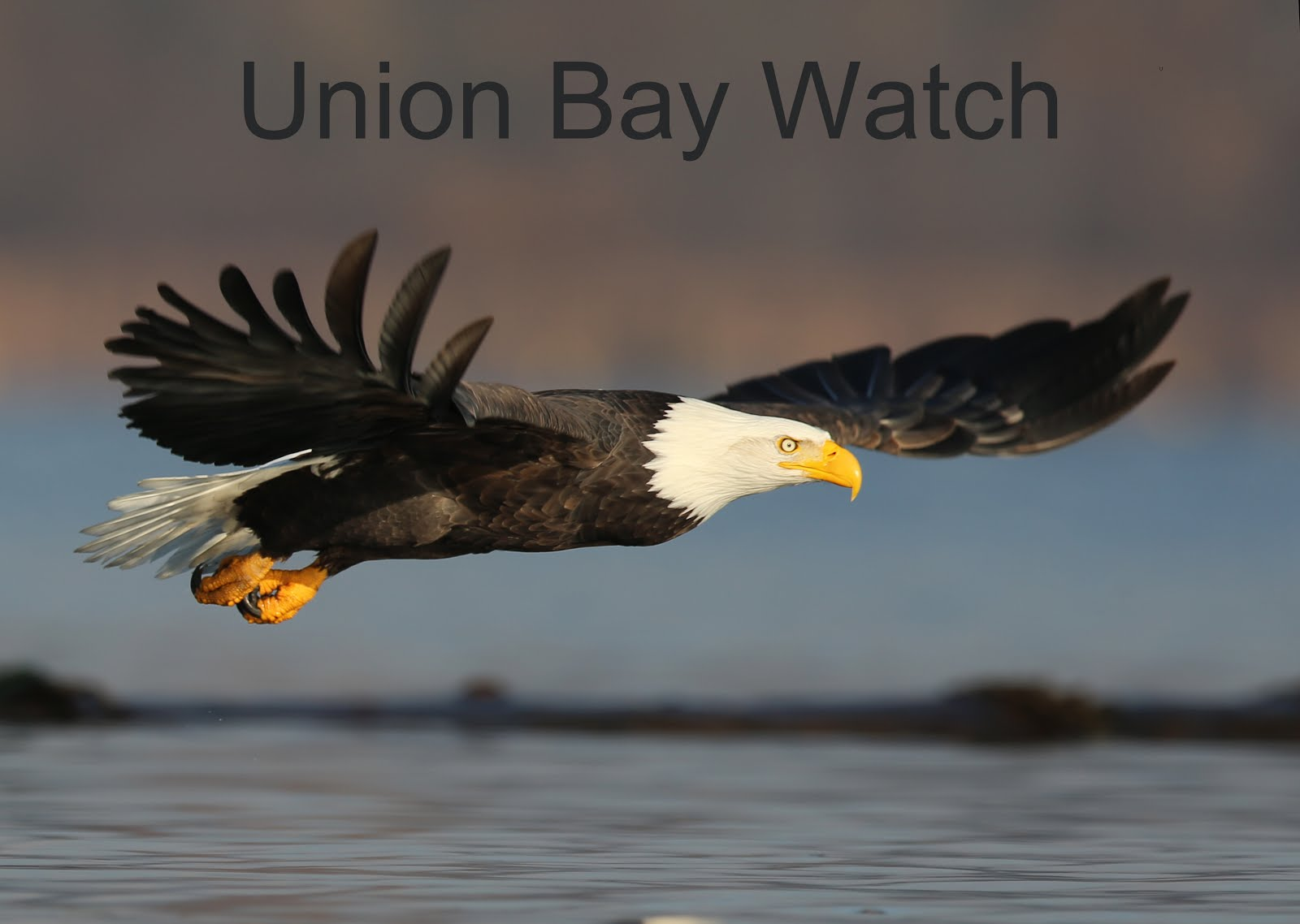 Union Bay Watch