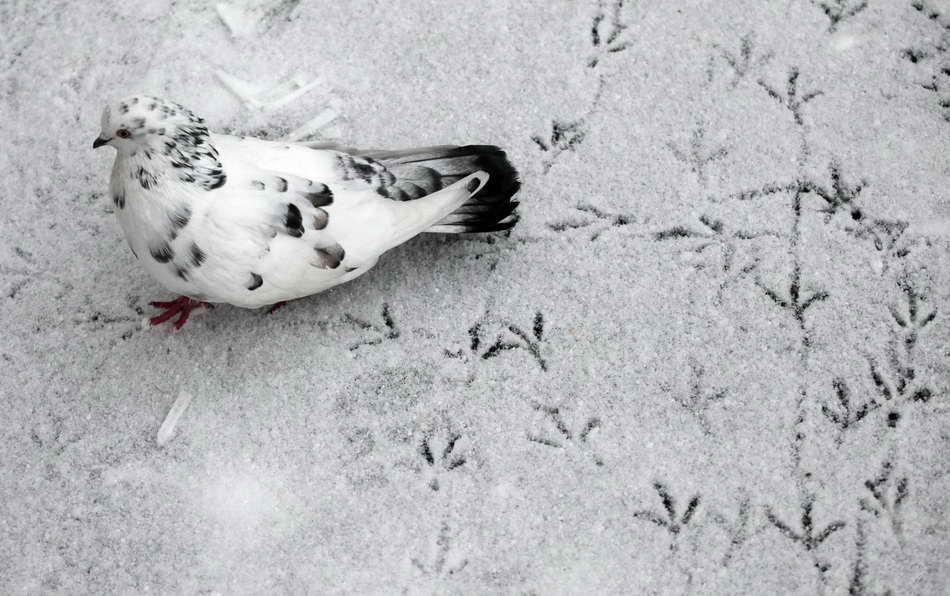 animals-in-the-snow-02.jpg