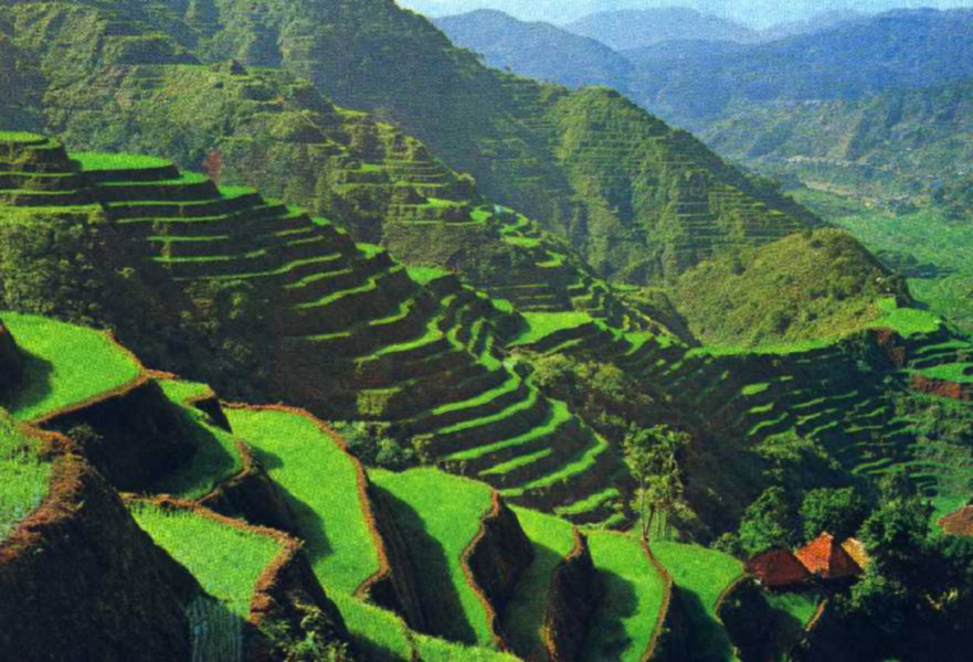 Banaue Philippines  city photo : The rice terrace fields of Banaue Philippines | Travel And Tourism