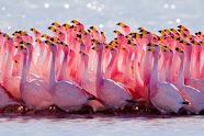 Nuestra oración es rosa
