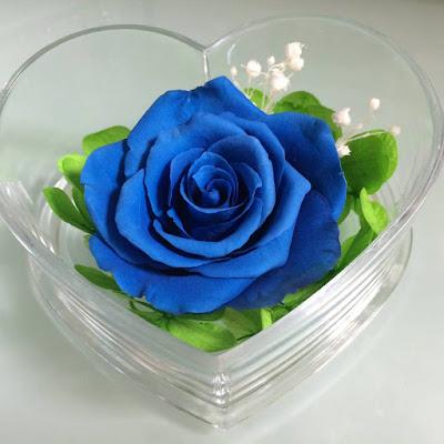 Hình ảnh hoa hồng xanh đẹp và lãng mạn nhất