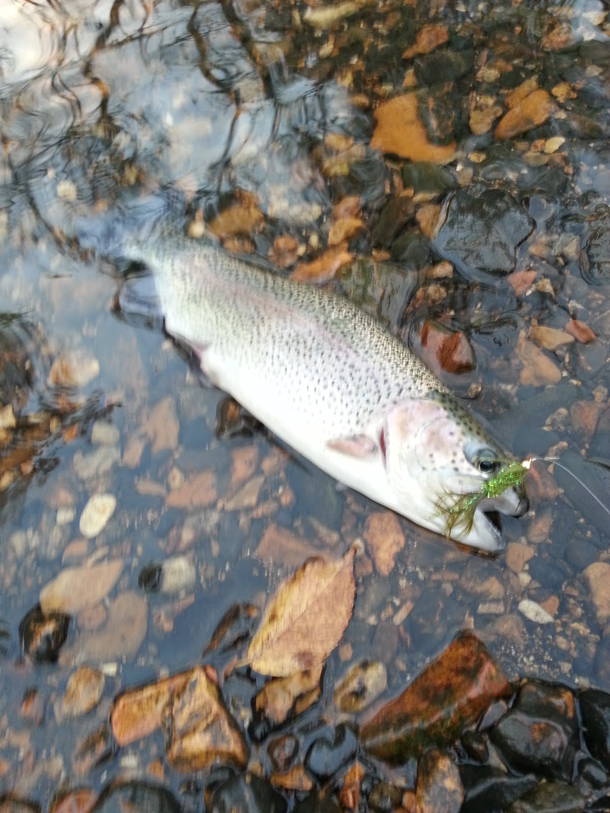 The Fly Journal Fly Fishing Experience Lower Illinois