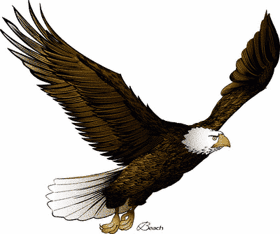 rules of the jungle clip arts of eagle clip art of eagles soaring clip art of eagles landing