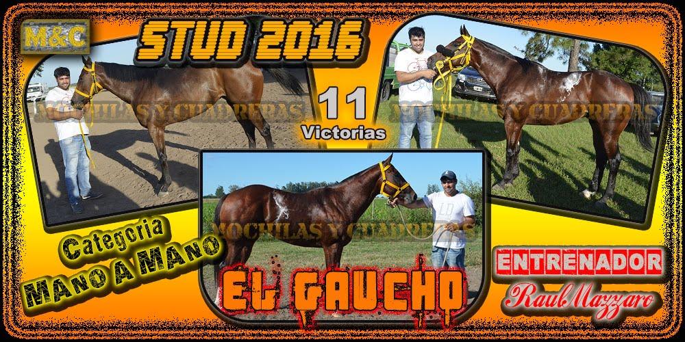 STUD EL GAUCHO