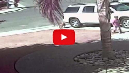 Video kucing selamatkan bocah (Youtube)