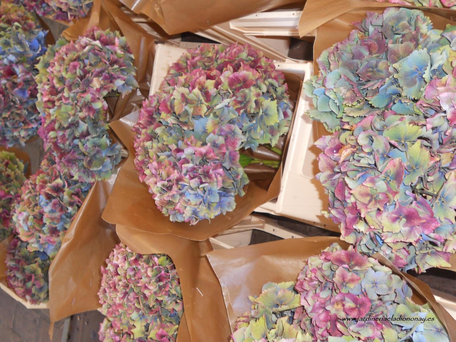 Jardineria eladio nonay secado de hortensias jardiner a - Como secar hortensias ...