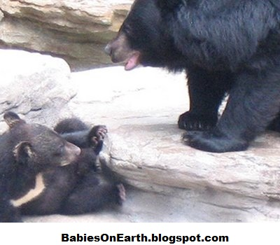 BABIES and Beautiful Mom: baby Asiatic Black Bear