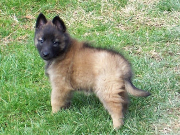 Puppy 88 Pictures Information