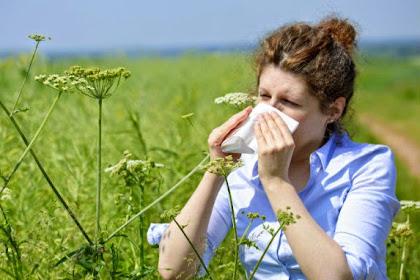 6 Pengobatan Alternatif untuk Alergi Sebuk Sari