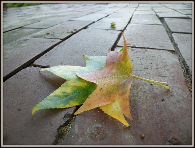 photos of autumn