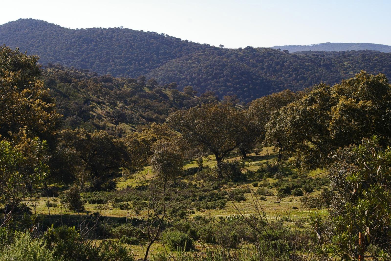 Primero de sociales paisaje mediterr neo for Arboles de hoja perenne para clima mediterraneo