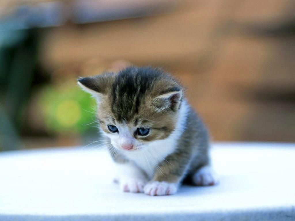 نتيجة بحث الصور عن أحمد خالد توفيق قطة