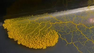 Ada Jamur yang Bisa Menyimpan Memori dan Menganalisa Masalah
