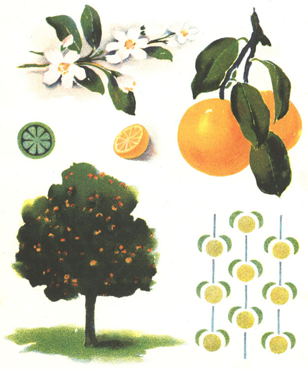 Reading, Roses & Prose: Orange Tree Vintage Illustration ...