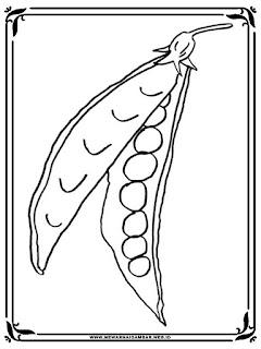 gambar kacang polong hitam putih