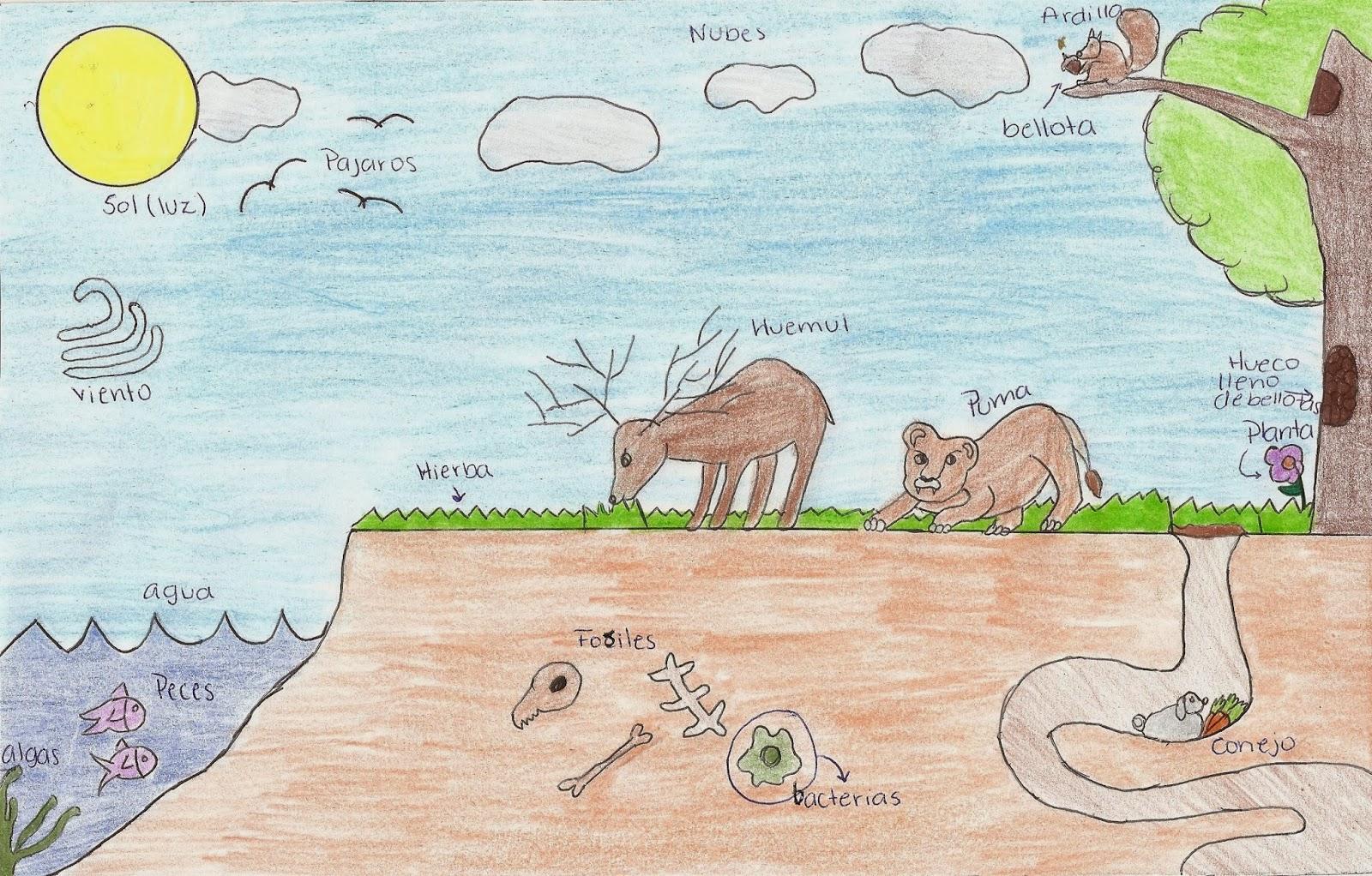 Más de 25 ideas increíbles sobre Dibujo de un ecosistema en ...