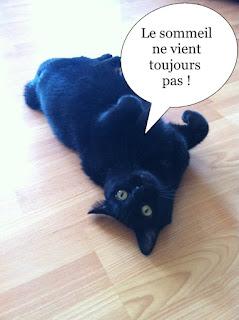 Minette noire de l'Ecole du Chat Libre de Toulouse.