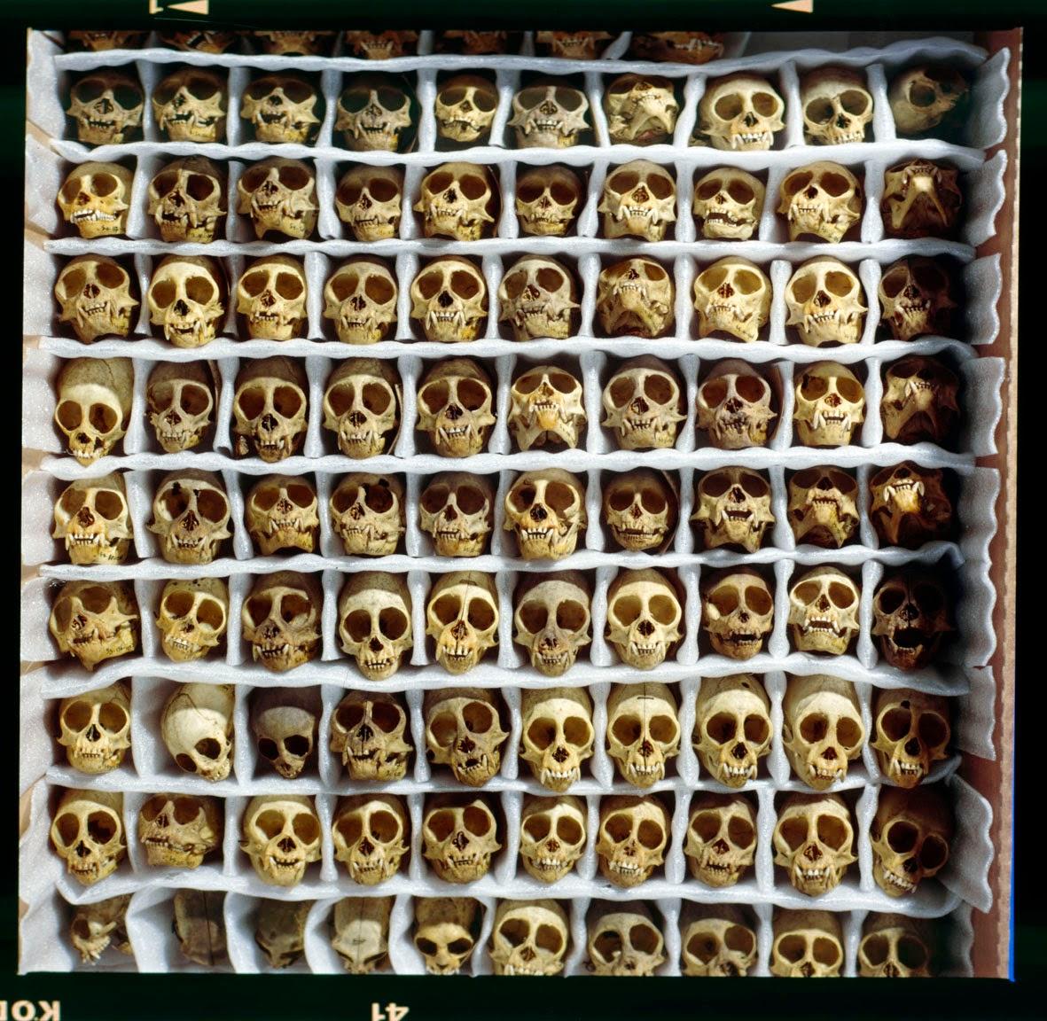 Morbid Anatomy: Amsterdam Anatomy Weekend with Morbid Anatomy and ...