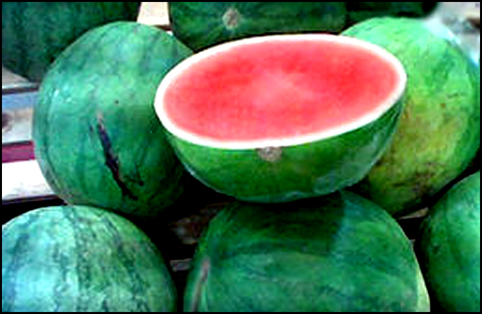 Tembikai Watermelon Is A Creeper Climbing And Cascading Originated