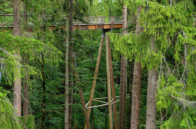 Tree Top Walk - Worlds Longest Tree Top
