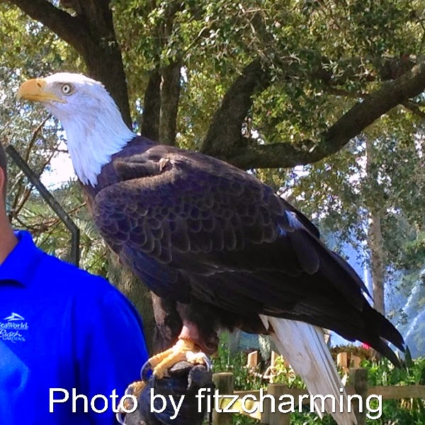Bald Eagle at Seaworld Florida