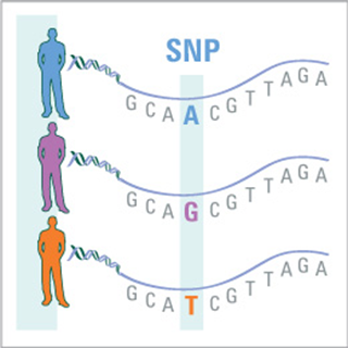 single nucleotide polymorphisms as human disease markers essay Identification of a human disease gene  won genetic testing from 23andme in an essay contest  are analyzed for 600,000 single nucleotide polymorphisms.