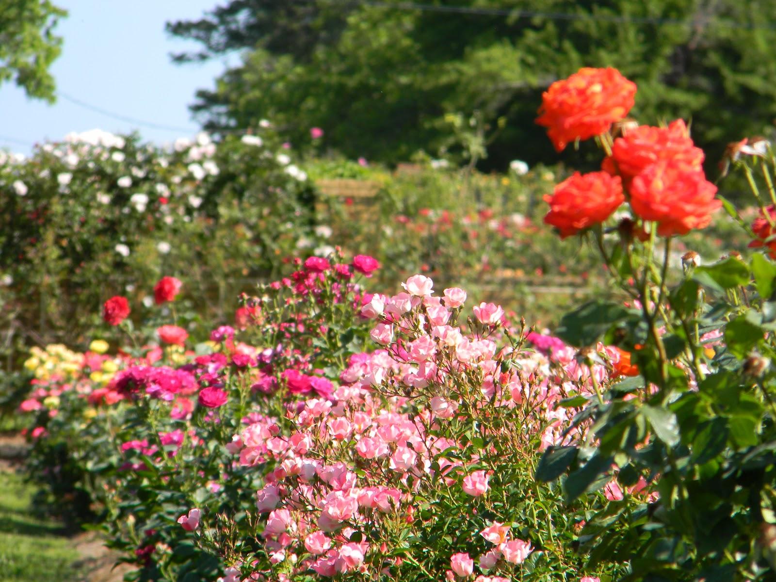 Rvfulltiminglove Rose Garden Tyler Tx