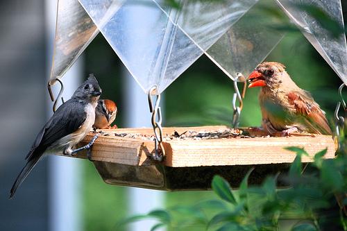 7 beneficios de los p jaros en tu jard n casas ideas for Aves de jardin