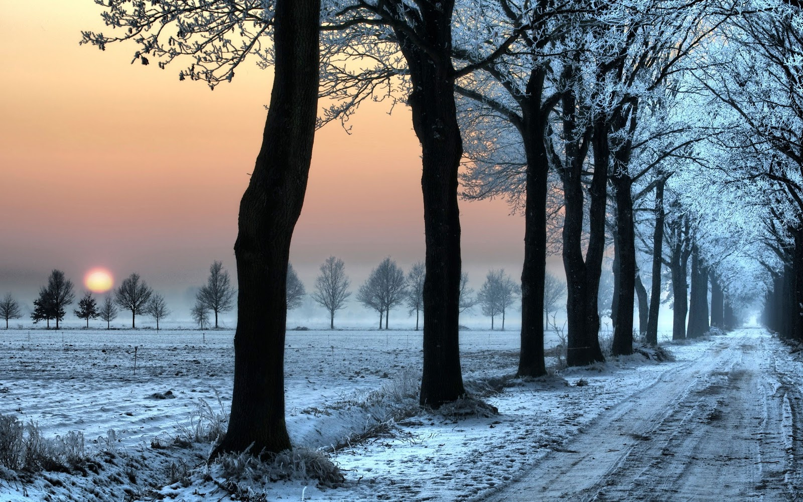 http://1.bp.blogspot.com/-Gb3p3L7Vvpo/UNg-ARrLEQI/AAAAAAAAB84/-2kudK3W9Tk/s1600/sunset_landscapes_nature_winter_snow_trees_skyline_roads_desktop_2560x1600_hd-wallpaper-1575538.jpg