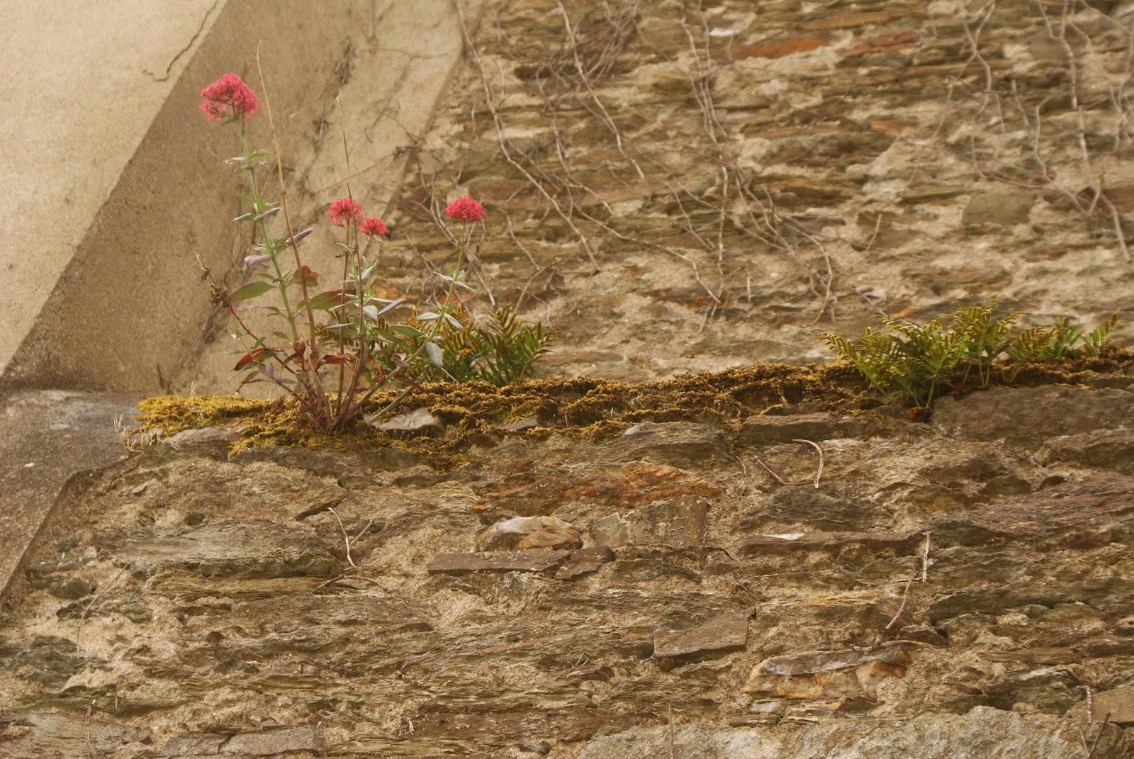 Fleurs qui poussent dans les murs for Fenetre qui rentre dans le mur