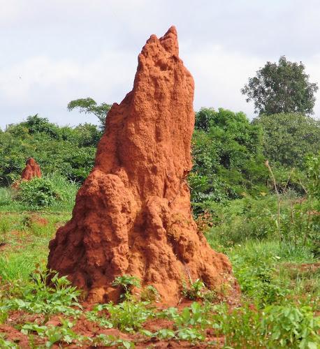 Voluntário na Guiné 22: sabedoria em crioulo!