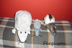 Szczurasy...