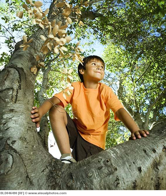 [Image: Hispanic_boy_climbing_tree_BLD046490.jpg]