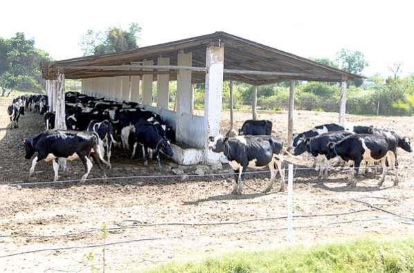 crianza de vacas lecheras pdf