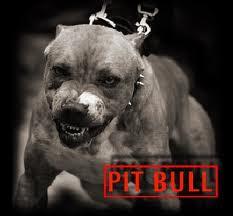 Pitbull, criação do Pitbull, cachorro Pitbull, mistérios do Pitbull.