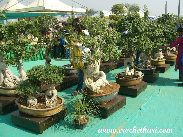 Ahmedabad flower show bonsai