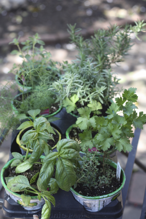 This Year I Thought It Would Be Fun To Create A Portable Herb Garden With  All Of The Essentials That I Could Bring Into The Kitchen When I Am Cooking  And ...