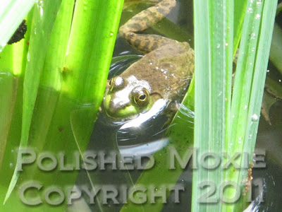 Picture of a frog floating among plants in a pond
