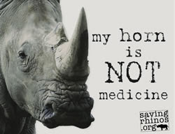 rhino, poaching, endangered species, biodiversity