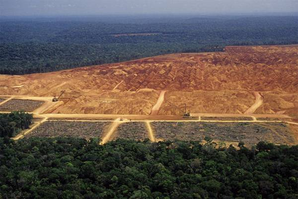 the obliteration of the rainforests essay The amazon rain forest is cleared out to raise cattle and to produce beef, this means that many different species of animals are losing their habitats and.